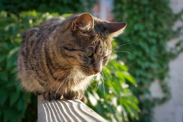 kočka na zábradlí
