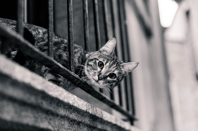 kočka na balkoně